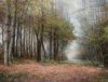 Voorzichtige Herfst In De Broekelei, 2017, Acryl O/Canvas, 130X170 Cm