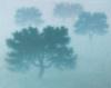 Ts Brouillard Épais,65X81Cm
