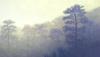 Ts Pins, Montagne,80X140Cm