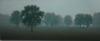 Tobias_Paysage Belge (40X100)